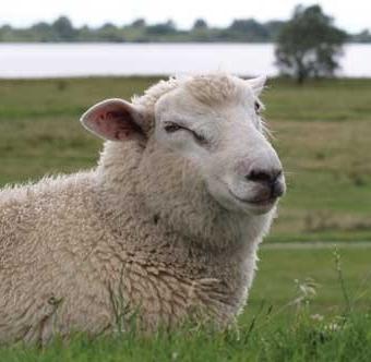 De voordelen van een wollen dekbed
